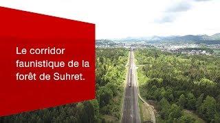 Download Voie libre pour les animaux sauvages: le corridor faunistique de la forêt de Suhret. Video