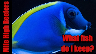 Download What Fish do I Keep in My Reef Tank? Video