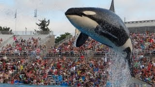 Download Shamu Show at Sea World San Diego July 2013 HD Video