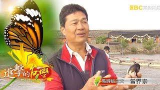 Download 馬蹄蛤之父 曾界崇不服輸傳奇-第196集《進擊的台灣》全集 Video