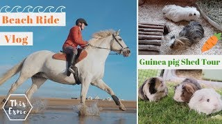 Download Beach horse ride and Guinea pig shed Tour / Clean up! | This Esme Video