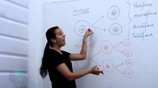 Download Mitose e meiose Video