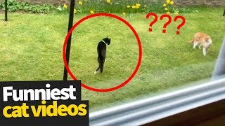 Download Hilarious Cat Viral Videos | Ultimate Cat Compilation 2019 Video