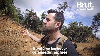 Download Les ravages de l'huile de palme à Bornéo : le grand JD raconte Video