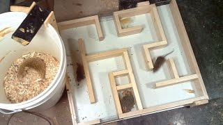 Download Mouse trap maze experiments Video