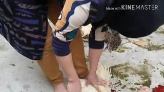 Download نساء يذبحين افضل من الرجال( مشاء الله عليهن Video