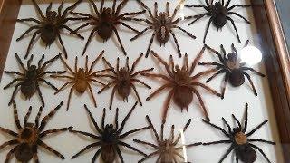 Download 12 выставка ярмарка насекомых, 12 Международная Выставка-Ярмарка насекомых Video
