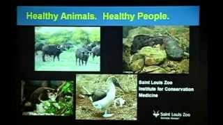 Download Conservation Medicine: What It Is, Why Care, and How It Can Help with the Survival of Species Video