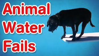 Download Animal Water Fails | Best of AFV Video
