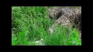 Download Bangabandhu Safari Park, Gazipur, Bangladesh Video