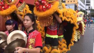 Download 新加坡龙狮节 2017 (Singapore Dragon & Lion Dance Festival 2017) Video