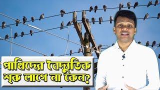 Download পাখিদের বৈদ্যুতিক শ্ক লাগে না কেন? Why Bird don't get Shocked on Electric Power Lines? Video