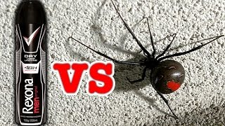Download Big Scary Redback Spider Vs Rexona Deodorant (Viewer Request) Video