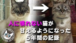 Download 【284】ジャン❤︎ポン 保護猫から5年 凶暴猫から甘えん坊へ[長編] 元野良猫の保護里親記録 Jean & Pont, former stray cats. Video
