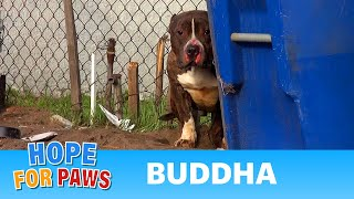 Download Rescuing a Pit Bull who just wanted to be loved. A MUST SEE Hope For Paws video! Video