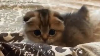 Download Funny Baby Animals Compilation - Cutest Animals Ever Video