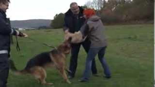 Download Polizeihunde sind nicht zum Kuscheln da Video