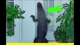 Download Hurricane irma brings total DESTRUCTION & HUGE alligators to Florida family neighborhoods OMG Video