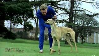 Download RACE THE WIND 30 - Greyhound Track 1960s (GB) Retirement Rescue • Dog Levrier Galgo Windhund Video