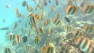 Download Lord Howe Island's underwater world Video