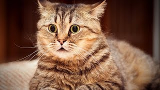 Download Funny Animals 😍🐱 Cute Cats Getting Scared (Part 1) [Funny Pets] Video