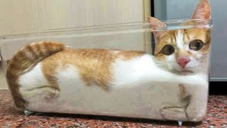 Download 😂 Funniest 🐱 Cats And 🐶Dogs - Awesome Cute Pet Animals' Life 😇 Video