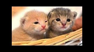Download Cute baby Animals - Cutest moments of Puppies, Kittens and Pets 2019 Video