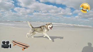 Download Fun Day at The Husky Beach House! Video