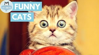 Download Try Not To Laugh At This Funny Cat Video Video