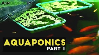Download Aquaponics Part 1 : Aquaponics in the Philippines | Agribusiness Philippines Video