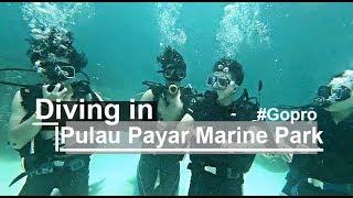 Download 【Gopro】蘭卡威必玩海島 #10米|芭雅島深潛挑戰|Diving in Malaysia|Gopro Hero 7 Black|馬來西亞EP1| Video