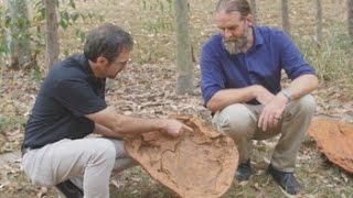 Download Identificadas 150 huellas de 21 especies de dinosaurios en Australia Video