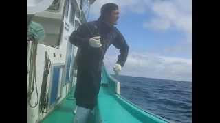 Download 大間マグロ一本釣り漁師さんの親子船「善漁丸」 Video