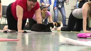 Download Cat Yoga Video