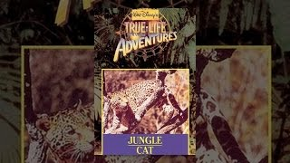 Download Jungle Cat Video