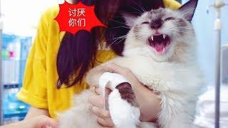 Download 患上猫传腹的第13天:我的小猫咪想家了 Video