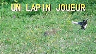 Download LAPEREAU qui joue avec une PIE BAVARDE Video