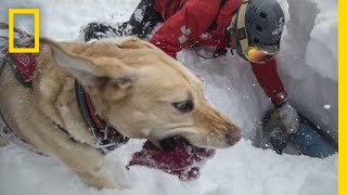 Download Capturing the Impact of Avalanche Rescue Dogs | National Geographic Video