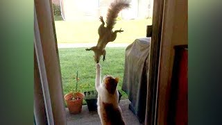 Download You'll be SURPRISED that SQUIRRELS CAN BE FUNNIER THAN CATS - Funny ANIMAL compilation Video