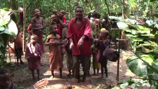 Download Baka Pygmy guitarists in the cameroon rainforest Video