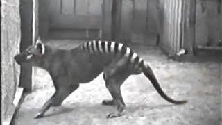 Download 10 Rare Videos of Extinct Animals Video