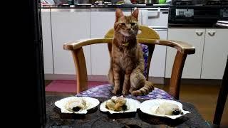 Download 薪ストーブで焼くホタテと猫 Scallop Video