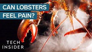 Download Why Do We Boil Lobsters Alive? Video
