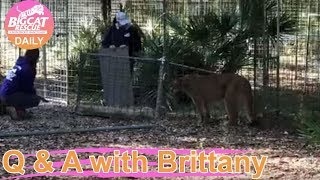 Download Catching Orion Cougar for a vet visit with Dr. Justin 12 2 2019 Video