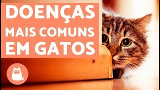 Download 10 doenças comuns em gatos | LISTA DE SINTOMAS Video