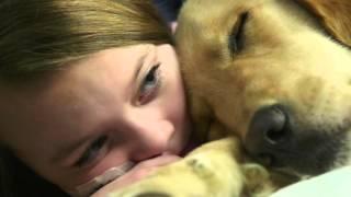 Download Canine Comfort | Cincinnati Children's Video