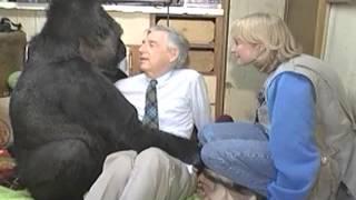 Download Koko The Gorilla meets Mr. Rogers - KokoFlix Video