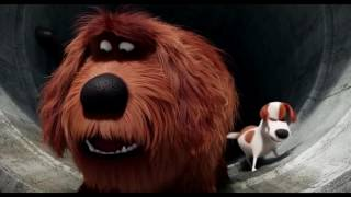Download Max and Duke Sausage Party - The Secret Life Of Pets - Angel TV 🎥 Video