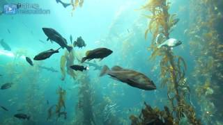 Download 4K AQUARIUM UNDERWATER SCENE + MUSIC | 2 Hour Nature Relaxation™ Film Video