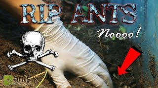 Download OH NO! ALL ANTS DEAD?! Video